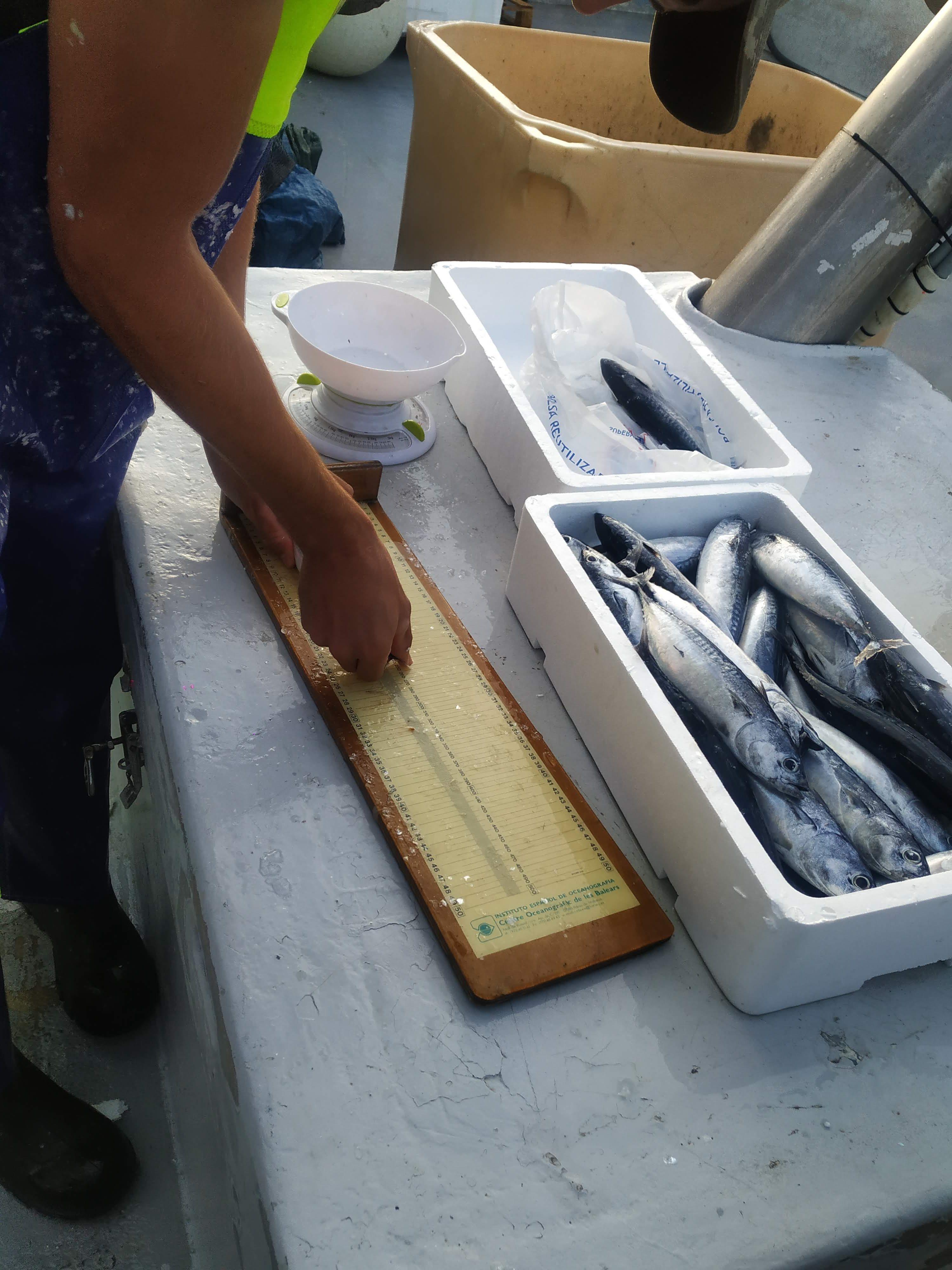 El `Nuevo Atxarre´ protagoniza el primer embarque demostrativo de toma de datos por los propios pescadores