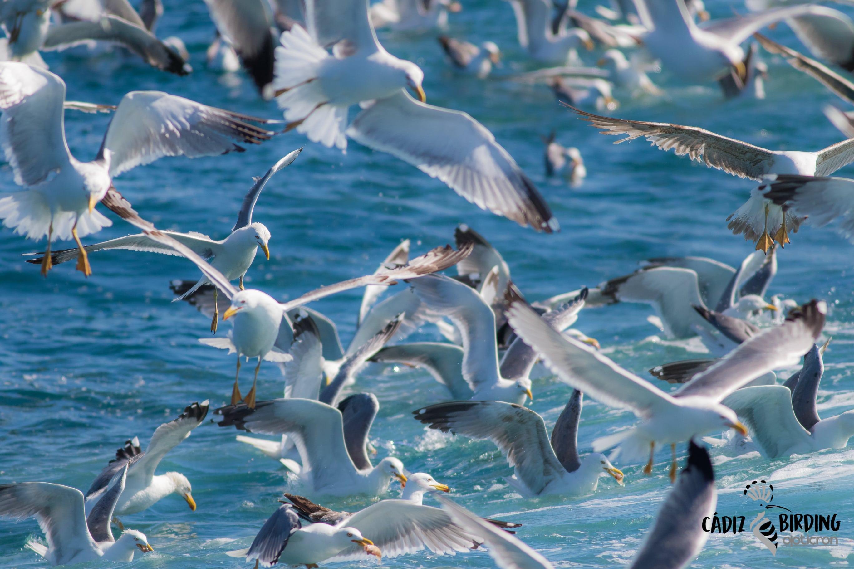 Investigadores de la UCA aconsejan al Gobierno ampliar el área de protección para el ave marina más amenazada del planeta