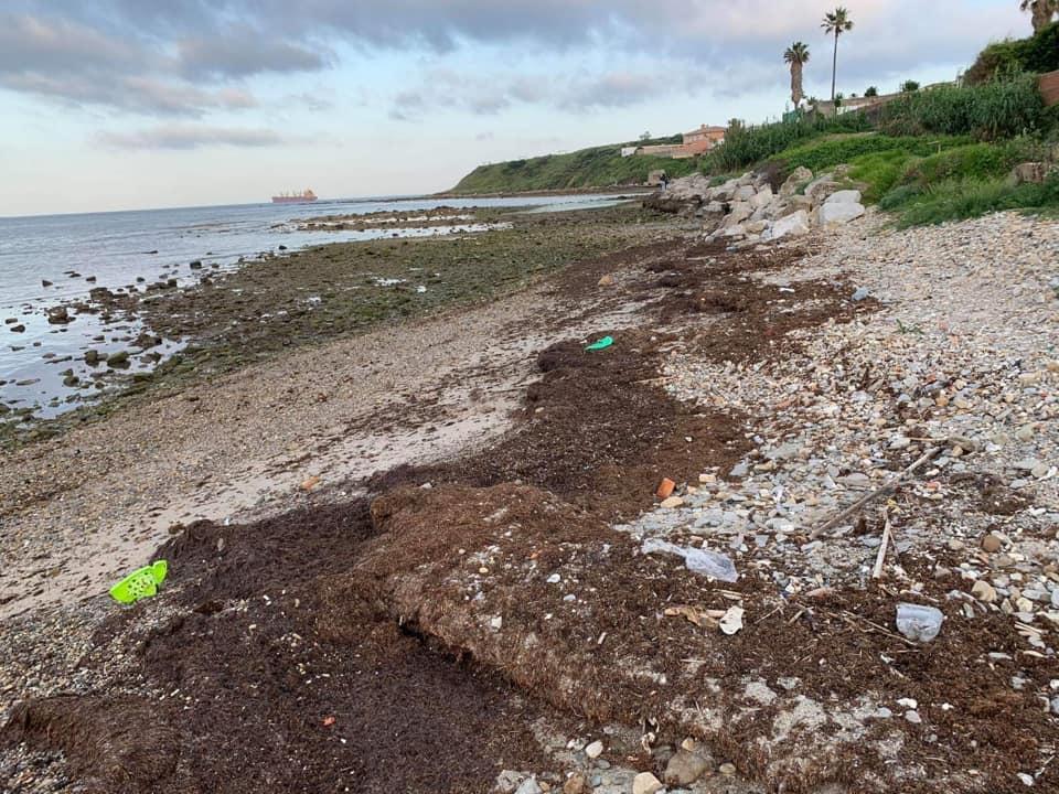 Retiran casi media tonelada de residuos de las playas del Campo de Gibraltar