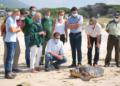 Liberada una tortuga boba en Los Lances tras su recuperación en el Cegma de Algeciras