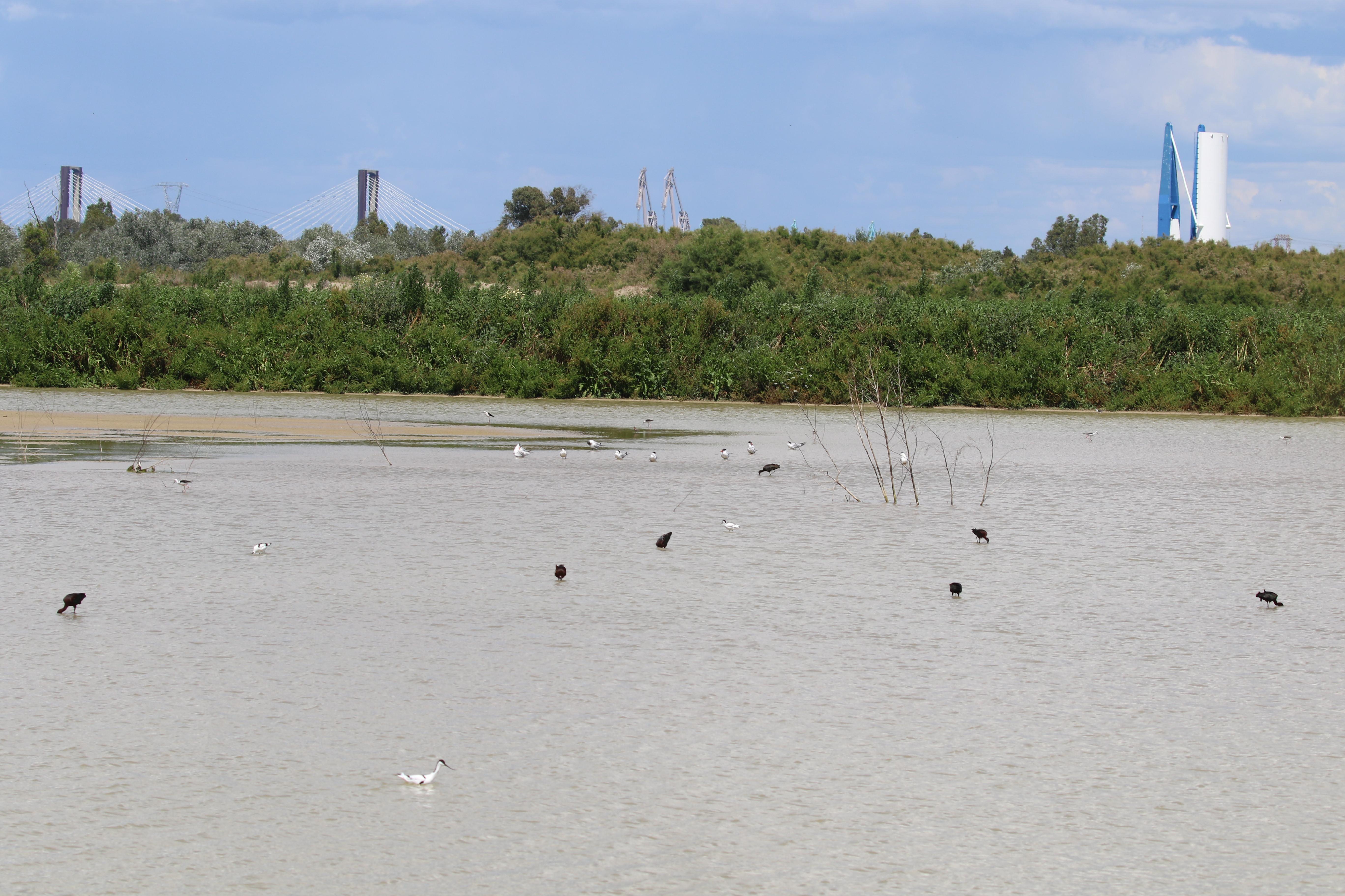 Autoridad Portuaria y CSIC censan más de 50 especies de aves acuáticas en los vaciaderos terrestres del enclave sevillano