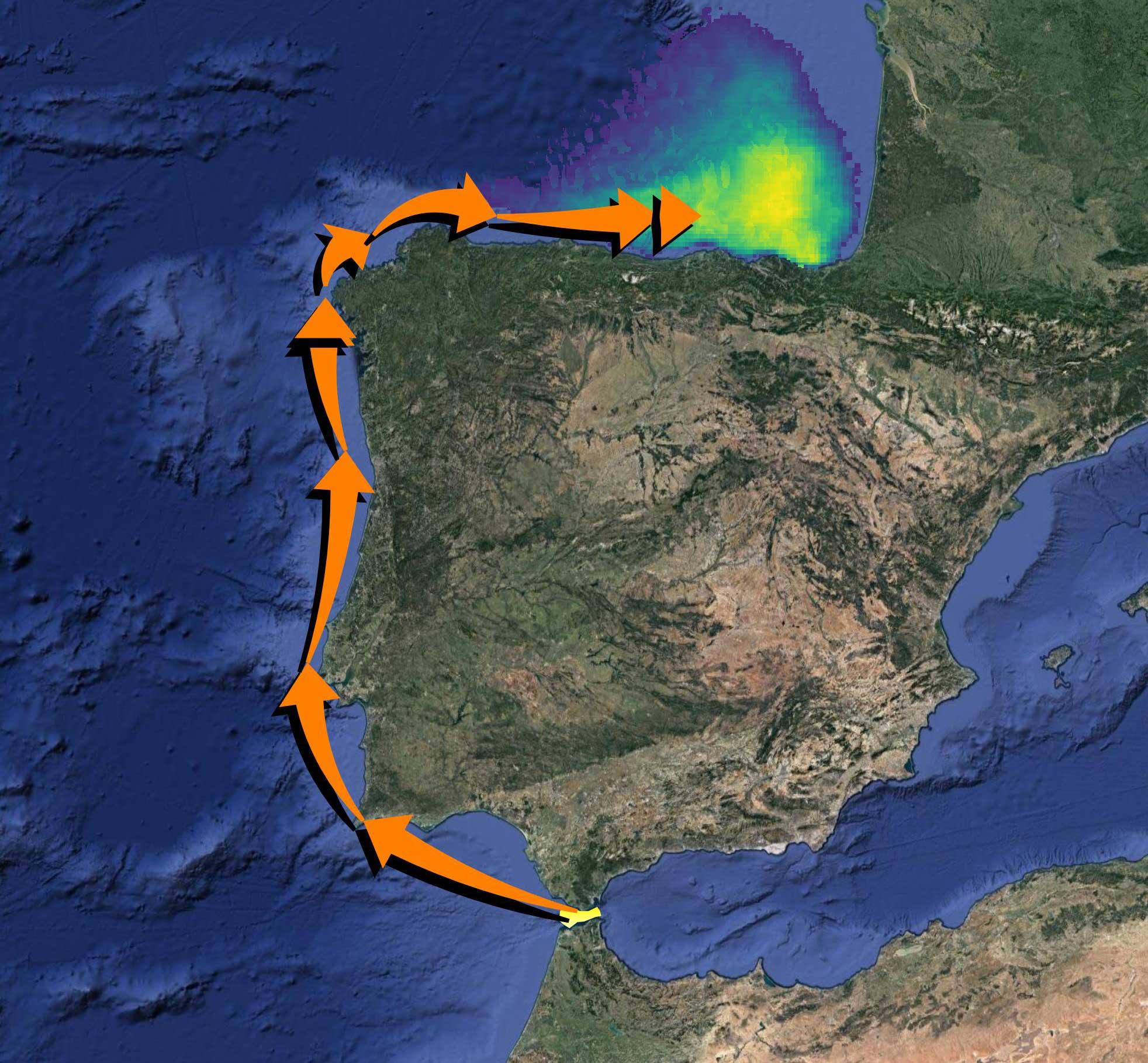 La migración de las orcas ibéricas a aguas del norte peninsular se iniciará en los próximos días