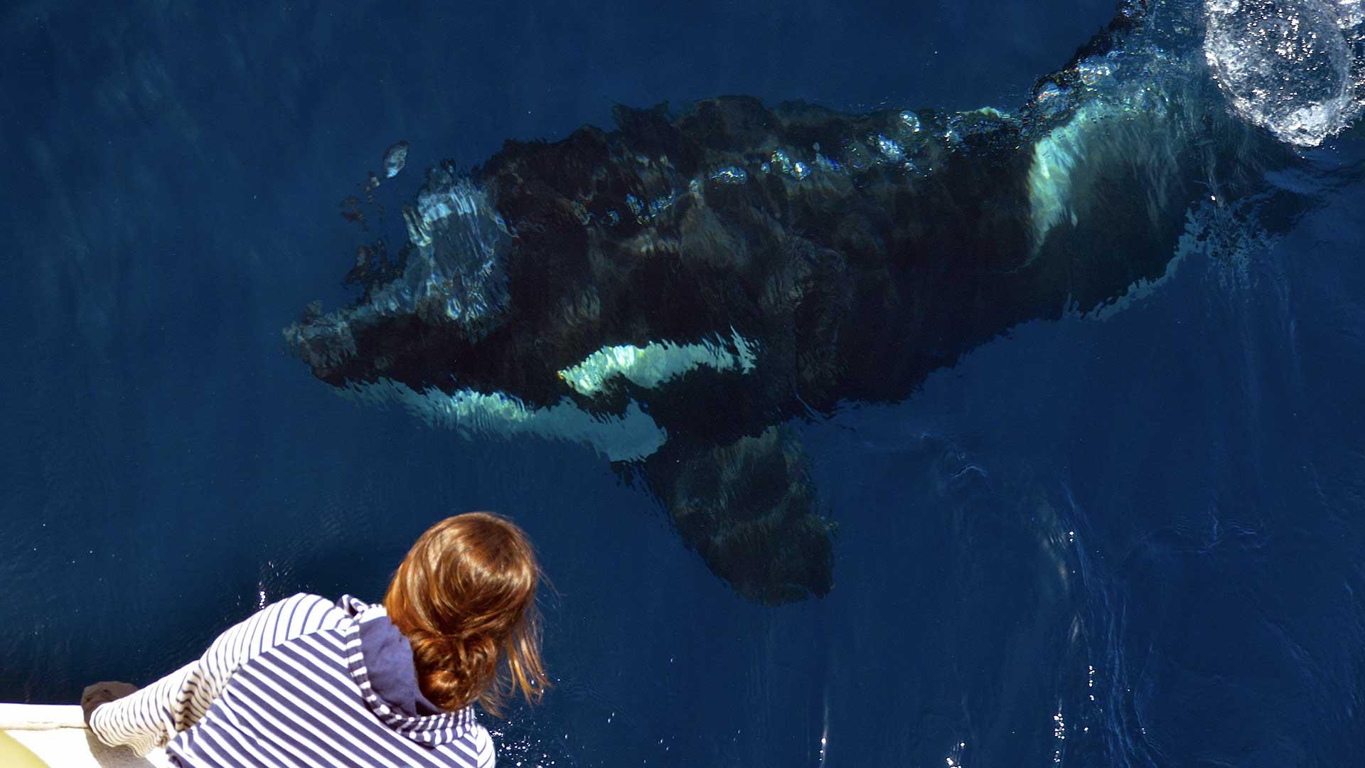CIRCE presenta una propuesta de medidas para reducir las interacciones entre orcas y embarcaciones