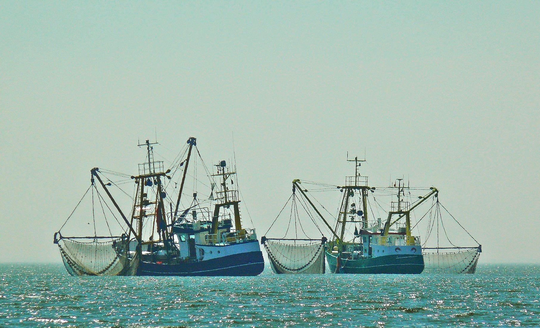 El sector pesquero, ejemplo de resiliencia en la pandemia